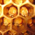 Méhpempő termelés fokozása